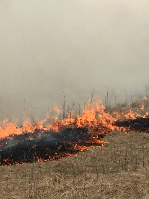 Roadside Prescribed Fire